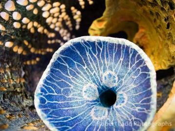 Detail of gourd painted by Carol Kroll
