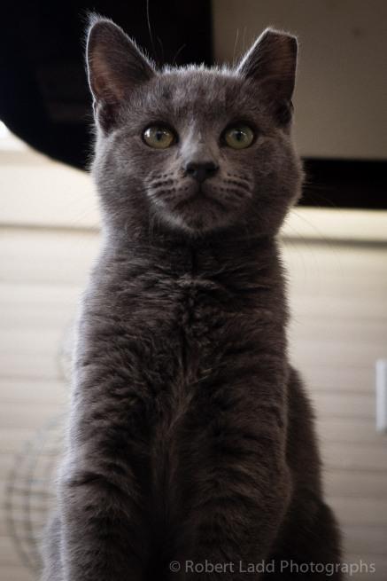 kittens-2039