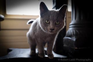 kittens-2042