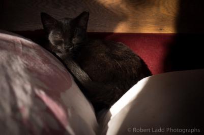 kittens-2045