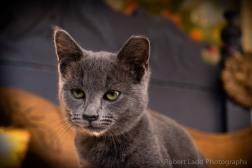 kittens-2060