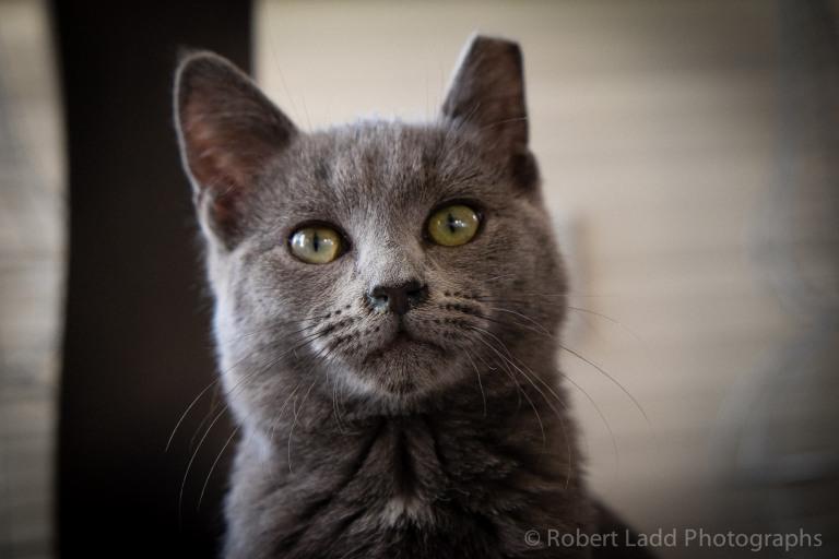 kittens-2063