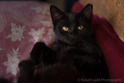 kittens-2083