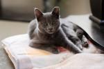 kittens-2098
