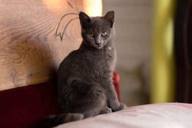 kittens-2111