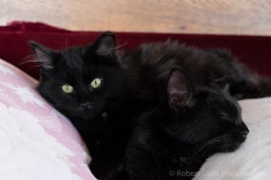 kittens-2147
