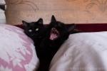 kittens-2157