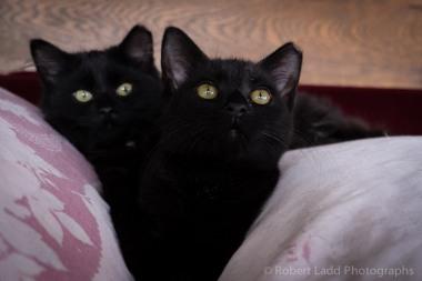 kittens-2167