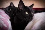 kittens-2179