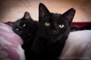 kittens-2180