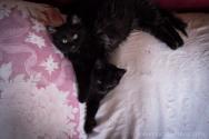 kittens-2184