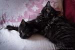 kittens-2187