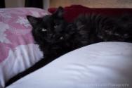 kittens-2189